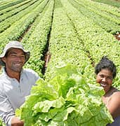Agricenter Contacto