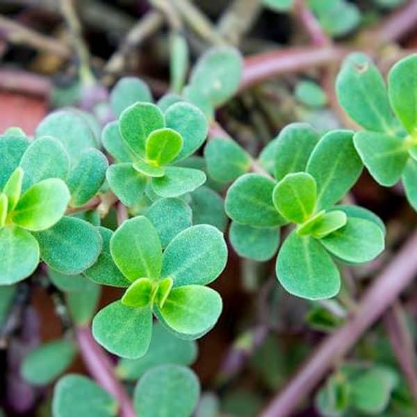 Agricenter Zevilla -  Herbicidas
