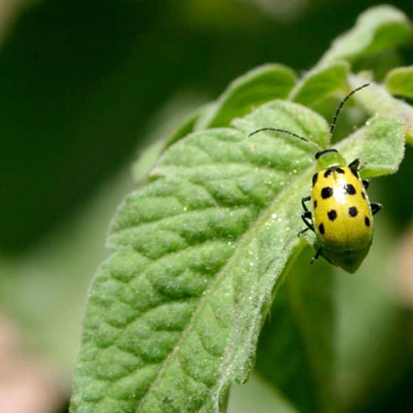 Agricenter Zevilla -  Insecticidas